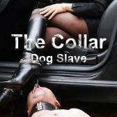 The Collar - Dog Slave