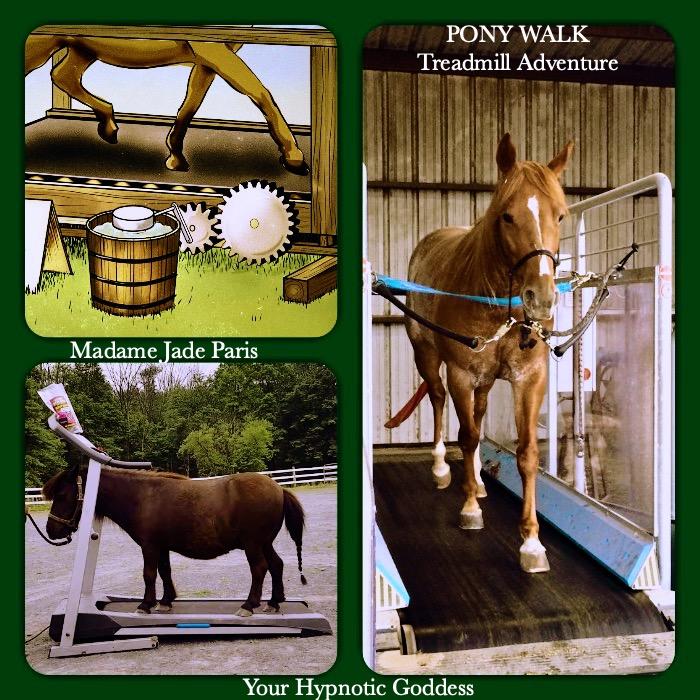 Pony Walk - Treadmill adventure